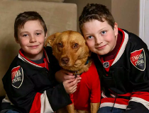 Bobby the dog, after Bobby Ryan