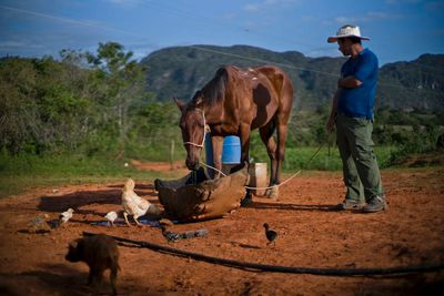 """In this Feb. 27, 2016 photo, Yoberlan Castillo Garcia waits as one of his horses drinks water on the small tobacco farm he runs with his brother-in-law in Vinales in the province of Pinar del Rio, Cuba. Garcia said they call the horses they rent to tourists """"automatics"""" because they return on their own. (AP Photo/Ramon Espinosa)"""