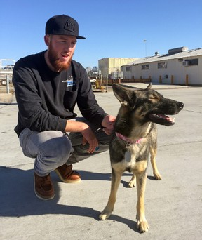 In this photo provided by the Navy, Conner Lamb squats next to Nick Haworth's 1.5-year-old German shepherd Luna, who fell overboard from his boat in the ocean off the Southern California coast in February, arrives at Naval Base Coronado in San Diego, Wednesday, March 16, 2016 Luna was found Tuesday on San Clemente Island, a Navy-owned training base. Haworth was working on a boat two miles from the island when Luna disappeared Feb. 10. (U.S. Navy via AP)