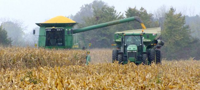 Corn is harvested along Waterworks Road in Sarnia, in this file photo. The Cellulosic Sugar Producers Cooperative, a group of Ontario farmers, has entered into a memorandum of understanding with Comet Biofining, a London-based company planning to build a sugar-fro-biomass plant in Sarnia. The arrangement with Comet will allow farmers involved in the co-op to own equity in the plant expected to produce sugar, from corn stalks and leaves, for use in making biochemicals and fuels. (File photo/The Observer)