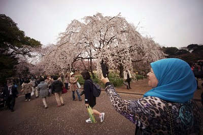 A foreign visitor takes a picture of blooming cherry blossoms at a park in Tokyo, Wednesday, March 30, 2016. Tens of thousands of admirers will be expected to show up at the park to enjoy the white pink blossoms. (AP Photo/Eugene Hoshiko)