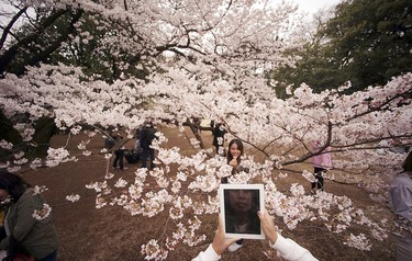 A visitor takes a picture of a woman with blooming cherry blossoms as background at a park in Tokyo, Wednesday, March 30, 2016. Tens of thousands of admirers will be expected to show up at the park to enjoy the white pink blossoms. (AP Photo/Eugene Hoshiko)
