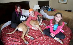 Maegan Maxam, left, (holding Kirby), with her mother Jackie Maxam and daughter Harmony Maxam-Kozushyna, 9, with Autumn the English great dane in their temporary home, the Econo Lodge on Princess Street. (Ian MacAlpine/The Whig-Standard)