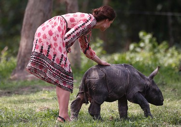 Britain's Kate, Duchess of Cambridge, plays with a baby rhino at the Centre for Wildlife Rehabilitation and Conservation (CWRC), at Panbari reserve forest in Kaziranga, in the north-eastern state of Assam, India, April 13, 2016. Prince William and his wife, Kate, planned their visit to Kaziranga specifically to focus global attention on conservation. The 480-square-kilometer (185-square-mile) grassland park is home to the world's largest population of rare, one-horned rhinos as well as other endangered species including swamp deer and the Hoolock gibbon. (Adnan Abidi/ Pool photo via AP)