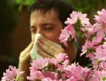 <p>Pollen is just one of the seasonal allergies that impact millions of people.</p><p>Tony Caldwell/Postmedia network