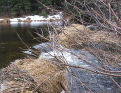 Spring Run off in Algonquin Park.