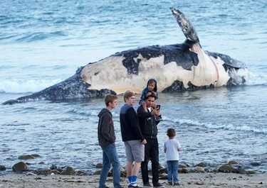 In this photo taken, Sunday, April 24, 2016, Kirk Lindahl, of San Clemente, snaps a selfie with a dead whale that washed up along the shore at Lower Trestles, a popular surf spot, a mile south of San Clemente, Calif. (Fred Swegles/The Orange County Register via AP)