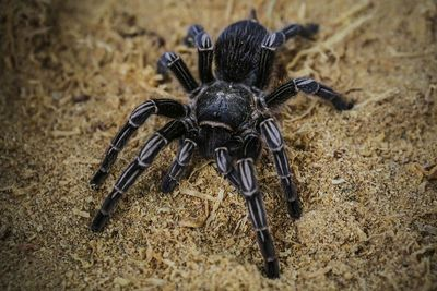 """Passengers aboard an Air Transat flight coming from the Dominican Republic to Montreal were shocked to discover two tarantulas aboard the plane. <a href=""""http://www.cbc.ca/news/canada/montreal/tarantula-plane-air-transat-1.3590780"""" target=""""_blank"""">According to CBC</a>, flight attendants advised passengers to put on shoes and cover their legs after the loose tarantulas were spotted on the April 2016 flight. One of the spiders was captured by a passenger in-flight, while the other was recovered after the plane landed in Montreal. (Getty Images)"""