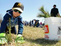 Hundreds of local Scouts including Kale Wrightly, 6, of Lakefield Beavers were out planting trees on Saturday, 30 April 2016 on Moncrief Line next to the Peterborough Airport near Peterborough, Ont. This is Scouts Canada's biggest annual environmental fundraiser. Beavers, Cubs, Scouts, Venturers, Rovers have been out in the community this past month collecting pledges and have 5,500 trees to plant. The trees and the site are in partnership with Otonabee Region Conservation Authority (ORCA). Clifford Skarstedt/Peterborough Examiner/Postmedia Network