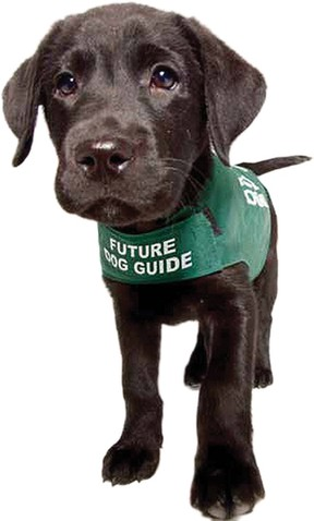 Dog guides cost around $25,000 a pup for training.