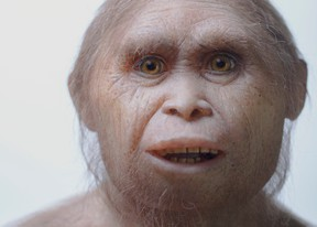 """This 2015 picture provided by Kinez Riza shows a reconstruction model of Homo floresiensis by Atelier Elisabeth Daynes at Sangiran Museum and the Early Man Site. In a paper released Wednesday, June 8, 2016, researchers say newly-discovered teeth and a jaw fragment, which are about 700,000 years old, have revealed ancestors of Homo floresiensis, also known as """"hobbits,"""" our extinct, 3 1/2-foot-tall evolutionary cousins. The fossils were excavated about 46 miles from the cave where the first hobbit remains were found in Indonesia. (Kinez Riza via AP)"""