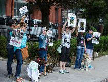 Dog meat protest
