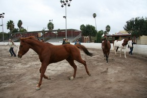 Equine-assisted therapy sessions are conducted by both an equine specialist and a mental health specialist, to ensure safety for both horses and humans. (Photo courtesy www.eagala.org)