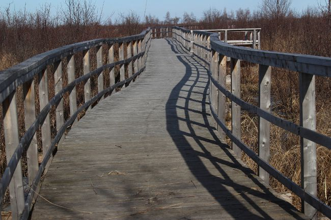 <p>A boardwalk at Cooper Marsh as seen in March 2016, in South Lancaster, Ont. 