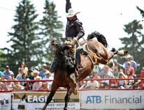 Rylan Geiger displays his skills for the crowd in the Saddle Bronc Riding event at a past Ponoka Stampede. (Ashli Barrett, Lacombe Globe)