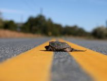 Think twice about helping animals on the road