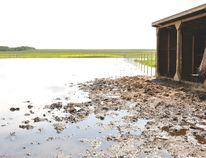 Lamont County and the Town of Lamont experienced extensive flooding on the July 9-10 weekend, and some residents such as Sada Gagnon are charging that the county doesn't have adequate infrastructure to drain the water. Gagnon's horse grazing area (pictured) was also flooded. (Omar Mosleh/Record Staff)
