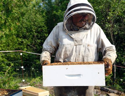 The air around Rock Springs area beekeeper John Switzer starts to fill with honey bees as he removes a box from one of his 34 hives on Thursday.