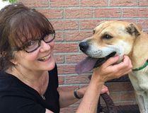 """London Humane Society executive director Judy Foster commiserates with Clara, a one year old """"investigation dog"""" in London. (DEREK RUTTAN, The London Free Press)"""