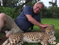 London Free Press reporter Joe Belanger pets a tame female cheetah at the Mount Kenya Wildlife Conservancy's animal rescue and rehabilitation centre, which also maintains a breeding program for cheetahs and bongo antelope.