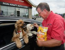Tom Jarvis feeds a pair of dogs some treats while filing the car with gas at Ron Kraft Auto Care in London Ontario on Friday July29, 2016. The garage has seen an increase in repeat business from their customers with dogs since they started the offer. MORRIS LAMONT / THE LONDON FREE PRESS / POSTMEDIA NETWORK