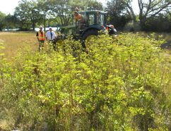 Ernst Kuglin/The Intelligencer Quinte West is launching an all-out war on the spread of wild parsnip, a noxious invading plant species that has taken root at more than 400 locations across the city. Public works is mowing the plant and that will be followed by an extensive spraying program. Monday morning Mayor Jim Harrison and public works director Chris Angelo were on the front lines along with city public works employee Paul Esford.