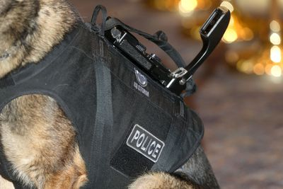 Eddie, a RCMP K9 member, wears a bulletproof vest featuring a built-in camera and communications system.