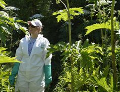 Meghan Grguric with hogweed (Special to The Free Press)