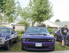 A trio of purple Dodge Challengers were an attractive sight during the Tiverton Park Manor Car Show on Aug. 17, 2016. (Darryl Coote/Reporter)