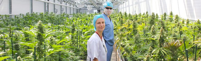 Sarah Herburger, 7 ACRES vice president and Matt Rogge, director of production, stand within the rows of mature medical cannabis plants in the 'Phase Zero' area of the facility. The plants were harvested in mid-August, 2016 and the crop is the first of two to be tested by Health Canada in order for 7 ACRES to receive its license to sell from the federal government. (Troy Patterson/Kincardine News/Postmedia)