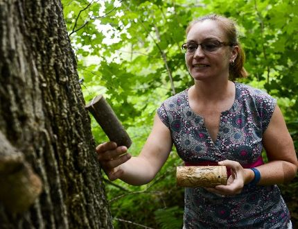 <p>Dr. Krista Ryall, research scientist from Natural Resources Canada, checks out mini bolts that hold wasp eggs which will grow then consume Emerald Ash Borer larva on Thursday, Aug. 18, 2016.</p><p> (James Park/Postmedia Network)
