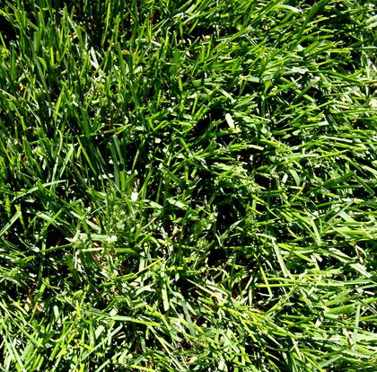 green grass filer