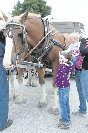 Petrolia's Claire Jardine will once again be bringing Belgian horses to Trinity Anglican Church's annual fall fair, providing free horse and carriage rides for all. The event will be held this Saturday. Submitted photo.