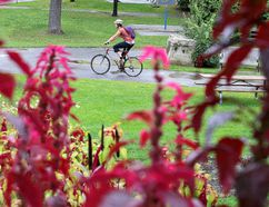A cyclist passes the Bell Park flower bed in Sudbury, Ont. on Tuesday September 13, 2016. Environment Canada is predicting a warmer than normal autumn.Gino Donato/Sudbury Star/Postmedia Network