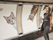 Cats take over London tube station_20