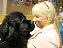 Tr'ever the Newfoundland dog, says hello to his owner, Christina Heard, at the Sudbury and District Kennel Club dog show at Toe Blake Memorial Arena in Coniston on Friday. The dog show runs until Sunday.