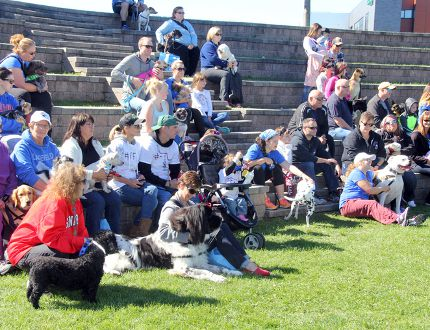 Sean Chase/Daily Observer More than 90 dogs and their owners turned out for the annual Ontario SPCA Friends for Life Walk at the Pembroke Marina. The event was close to raising its campaign goal of $33,000.