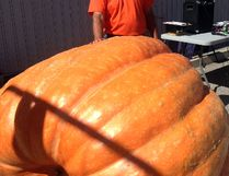 John Butler had the largest pumpkin at Wallaceburg's Pumpkinfest, as it weighed in at 1,512 lbs. Butler also had the longest gourd and largest tomato.