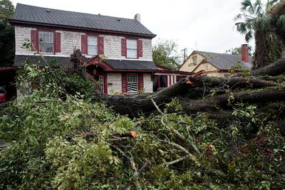 A downed elm tree is seen in a residential neighborhood, October 8, 2016 in Savannah, Georgia. Across the Southeast, Over 1.4 million people have lost power due to Hurricane Matthew which has been downgraded to a category 1 hurricane on Saturday morning. (Photo by Drew Angerer/Getty Images)