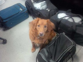 Detector dog Shaggy sniffed out nearly 100 kilograms of cocaine in the back of a trailer on Oct. 5.
