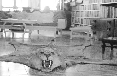 FILE - In this May 10, 1965, file photo, the skin of one of the lions Ernest Hemingway killed is displayed on the library floor of Hemingway's home in Cuba. A forum at the John F. Kennedy Presidential Library & Museum on Wednesday, Oct. 12, 2016, in Boston, will be held to discuss joint efforts in a U.S.-Cuba collaboration to preserve artifacts at Hemingway's former Cuban estate. (AP Photo/File)