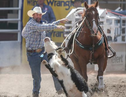 Aryn Toombs/Calgary Herald Lee Rombough jumps off his horse to chase his calf at the tie-down roping event at the Calgary Stampede Rodeo in Calgary last July. The Sexsmith product will be competing at the Canadian Finals Rodeo in Edmonton in November for the third consecutive year.
