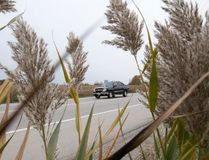 Phragmites, invasive perennial grasses, grow beside Wonderland Road south of Exeter Road. Ontario is penny-wise and pound-foolish when it comes to controlling such invasive species, the environment commissioner says in a report. (CRAIG GLOVER, The London Free Press)