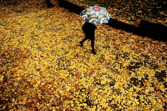 A woman with an umbrella walks through a park during an autumn day in the Bulgarian capital Sofia. DIMITAR DILKOFF/Getty Images)