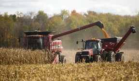 Wayne Shipley unloads seed corn into a semi-trailer at a field north of London two weeks ago. Farmers generally saw an average to above-average corn harvest, but yields varied from 40 to 250 bushels an acre, says agronomist. Mike Hensen/The London Free Press