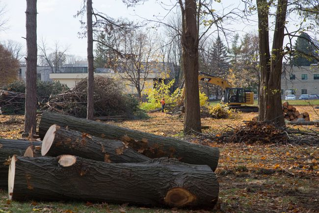 Dozens of trees were removed from the west side of St. Peter's Seminary to make room for sewer pipes and a parking lot in London. (DEREK RUTTAN, The London Free Press)