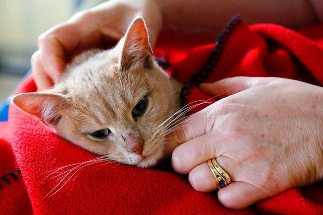 Luke Hendry/Intelligencer file photo Fixed Fur Life, the local group which spays or neuters animals to save them from being euthanized, surpassed the 20,000 animal mark this year. Its founder, Darlene Quinsey, is the recipient of an Ontario Medal for Good Citizenship.