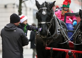 From the arms of his father Todd Arsenault, Gavin Llewellyn pets one of the horses from the free wagon rides provided downtown Kingston, Ont. on Saturday December 24, 2016. Steph Crosier/Kingston Whig-Standard/Postmedia Network
