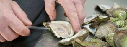 Warning from AHS after 10 cases of stomach illness linked to raw oysters