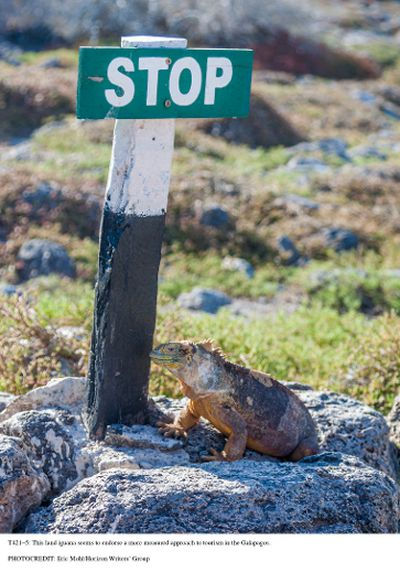 This land iguana seems to endorse a more measured approach to tourism in the Galapagos. ERIC MOHL/HORIZON WRITERS' GROUP